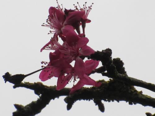 Nov-Flower